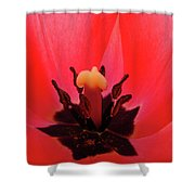 Red Tulip Art Print Inside Tulips Flowers Baslee Troutman Shower Curtain