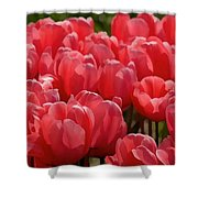 Red Tulip Buds Crest The Earth Shower Curtain
