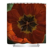 Red Tulip Center Shower Curtain