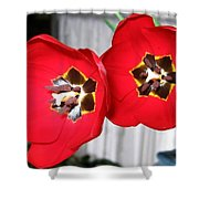 Red Tulip Duo Shower Curtain