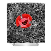 Red Tulip From Above Shower Curtain