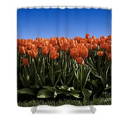 Red Tulip Garden Shower Curtain