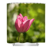 Red Tulip Head Shower Curtain