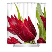 Red Tulip Heads Sprinkled Shower Curtain