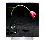 Red Tulip On Black Shower Curtain
