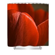 Red Tulip Up Close Shower Curtain
