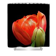 Red Tulip With Bud Shower Curtain