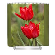 Red Tulips In A Meadow Closeup Sunny Spring Day Shower Curtain