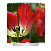 Red Tulips Petals Shower Curtain