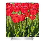 Red Tulips Square Shower Curtain