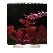 Red Twilight Shower Curtain