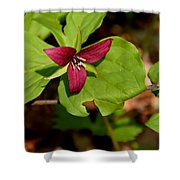 Red Upright Trillium Shower Curtain