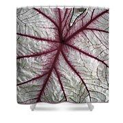 Red Veined Leaf Shower Curtain