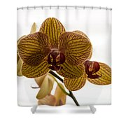 Red Veined Orchid Shower Curtain