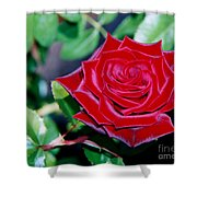 Red Velvet Rose Shower Curtain