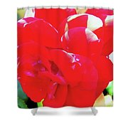 Red Velvet With Dewdrops  Shower Curtain
