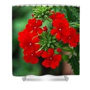 Red Verbana Shower Curtain