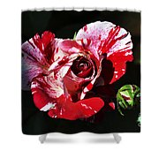 Red Verigated Rose Shower Curtain