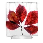 Red Vine Leaf Shower Curtain