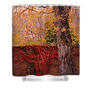 Red Vine With Maple Tree Shower Curtain