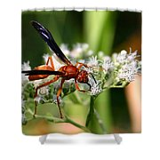 Red Wasp On Lace Shower Curtain