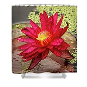 Red Water Lily Shower Curtain