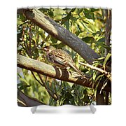Red Wattlebird Australia Shower Curtain