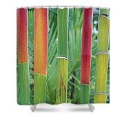 Red Wax Palm Stalks Shower Curtain