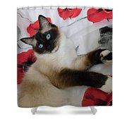 Red White And Ragdoll Kitty Cat Silktapestrykittenstm  Shower Curtain