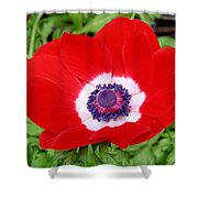 Red White N Blue Shower Curtain