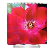 Red White Rose Shower Curtain