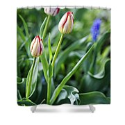 Red White Tulips Shower Curtain