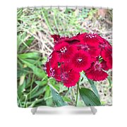 Red Wild Flowers Shower Curtain