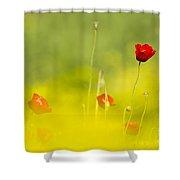 Red Wild Poppies Shower Curtain