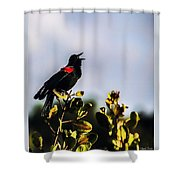 Red Wing Black Bird  Shower Curtain