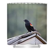Male Red Wing Black Bird Shower Curtain