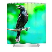 Red Wing Blackbird Perching And Singing Shower Curtain