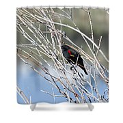 Red Winged Black Bird At Chatfield Shower Curtain