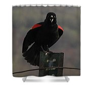 Red Winged Black Bird Shower Curtain