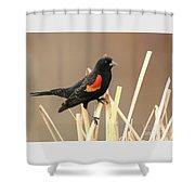Red Winged Blackbird I I Shower Curtain