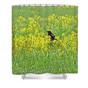 Red-winged Blackbird In Wild Mustard Shower Curtain