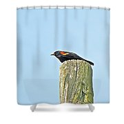 Red-winged Blackbird On Lookout Duty Shower Curtain