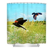 Red-winged Blackbirds Shower Curtain