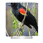 Red-winged Perch Shower Curtain