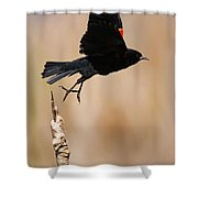 Red-winged Takeoff Shower Curtain