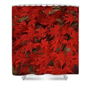 Red With Envy Shower Curtain