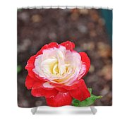 Red With Pink White Yellow Centered Rose Shower Curtain