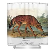 Red Wolf (canis Lupus) Shower Curtain