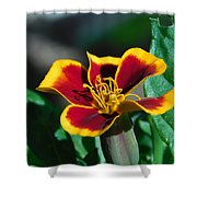 Red/yellow Side View 4-24-16 Shower Curtain