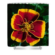 Red/yellow Flower 4-24-16 Shower Curtain